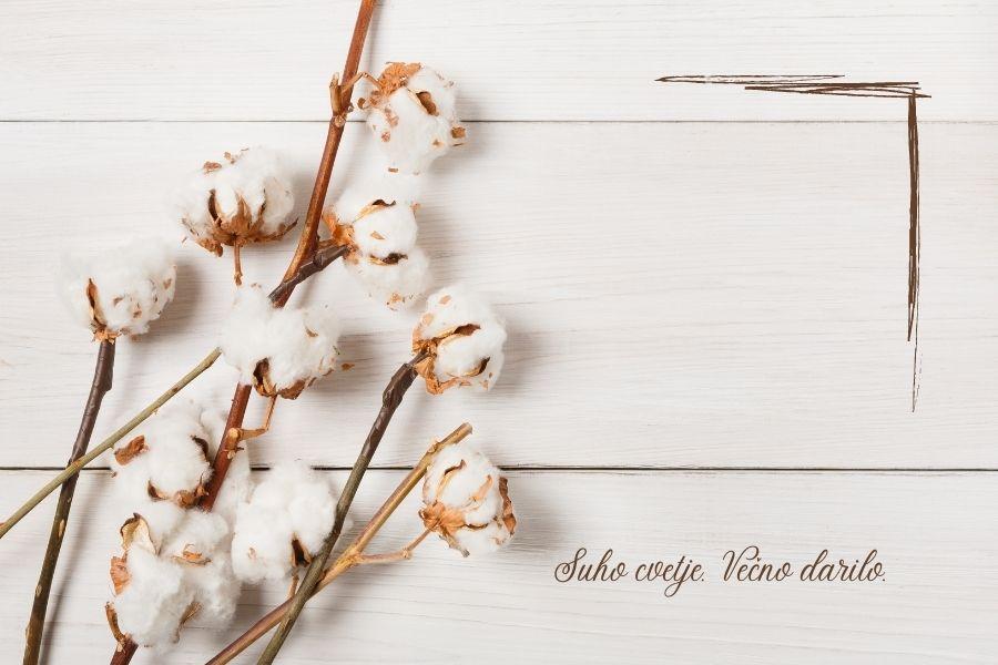 suho-cvetje (1)